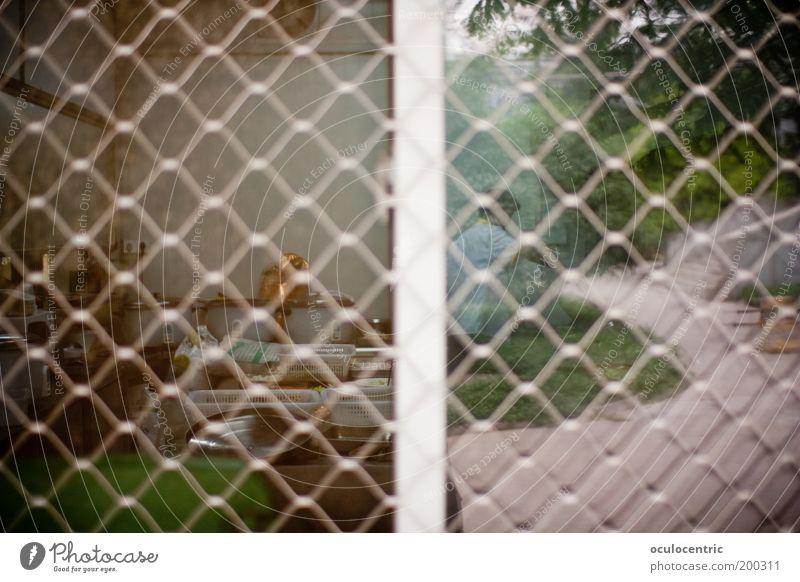Schizo Xi'an China Asien Fenster Originalität braun grün Küche Vignettierung Gitter Fensterscheibe Maschendrahtzaun durchsichtig Arbeitsplatz Lomografie trashig