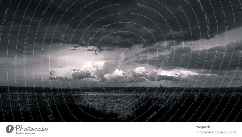 Regen kommt Freiheit Umwelt Natur Landschaft Urelemente Luft Himmel Wolken Gewitterwolken Sonnenlicht Wetter schlechtes Wetter Unwetter Sturm Seeufer Bodensee