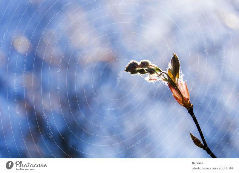 Lichtnahrung Natur Pflanze blau schön Baum rot Blatt Blüte Frühling natürlich Glück hell leuchten Wachstum frisch Sträucher