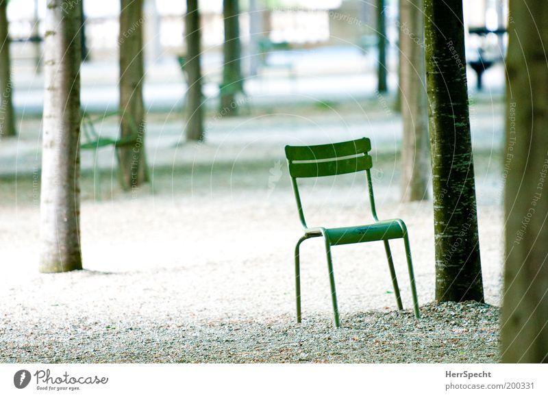 Asseyez vous! Baum grün grau Wege & Pfade Park Metall Stuhl Reihe Kies Kieselsteine Dinge Naturliebe Baumreihe