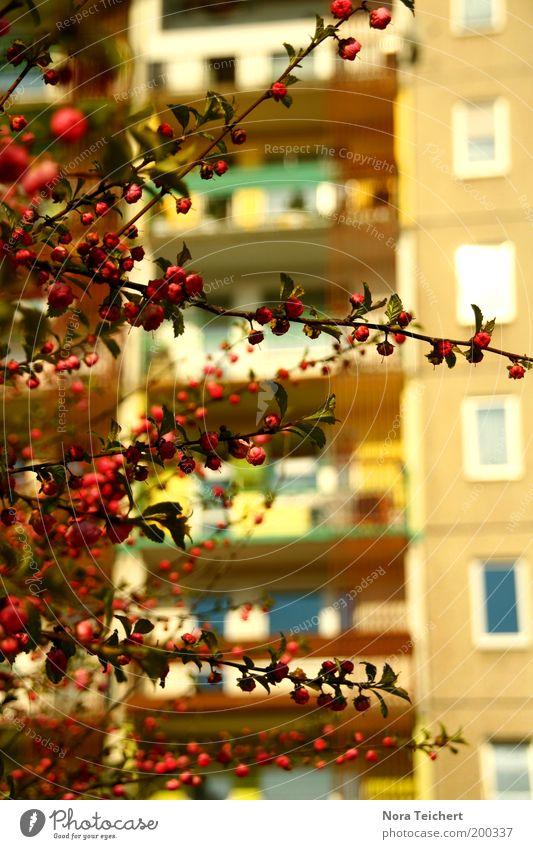 Kontraste Umwelt Natur Pflanze Frühling Sommer Sträucher Blüte Blütenknospen Haus Hochhaus Fassade Balkon Fenster Plattenbau Blühend Wachstum frisch schön rosa
