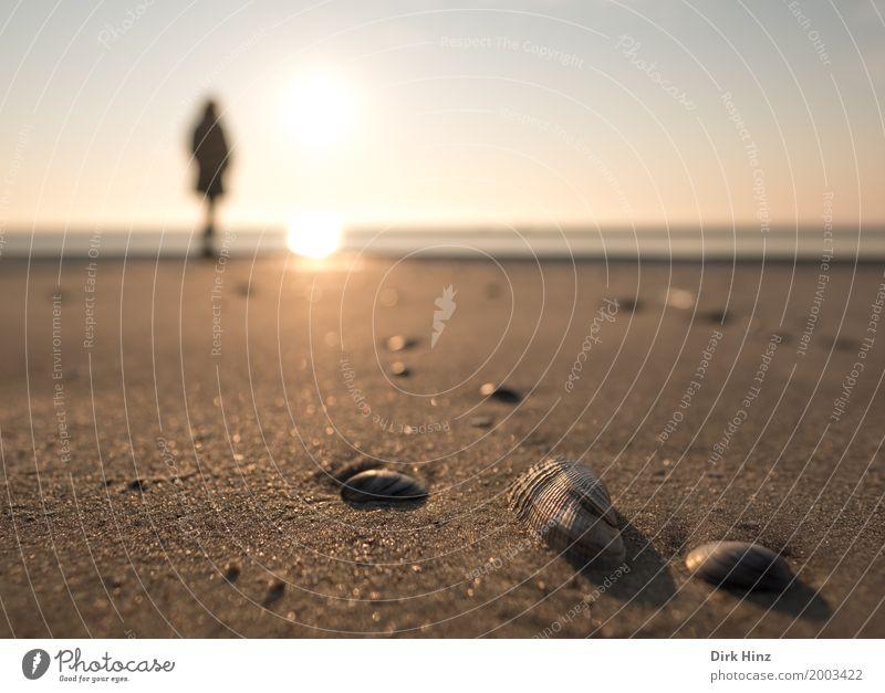 Der Sonne so nah Mensch Natur Ferien & Urlaub & Reisen Meer Erholung ruhig Ferne Strand Umwelt Küste Freiheit Tourismus Sand Horizont Ausflug