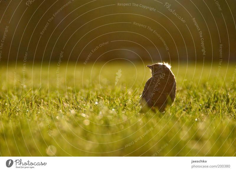 Doof hier draußen. grün Sommer Einsamkeit Leben Wiese Freiheit Garten Gras Frühling klein Park Vogel Tierjunges Angst Zukunft Wandel & Veränderung