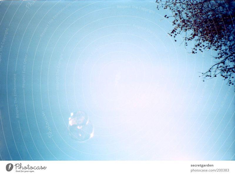 seifenoper. Kinderspiel Seifenblase Wolkenloser Himmel Sommer Schönes Wetter Sträucher glänzend hell nass retro blau weiß Freude Glück Frühlingsgefühle