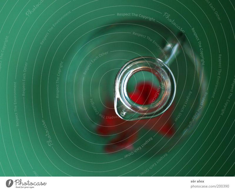 einige Tage später grün schön rot Dekoration & Verzierung Glas rund Klarheit Kitsch Stillleben Blütenblatt Vase Behälter u. Gefäße kreisrund Kannen Öffnung Blumenvase