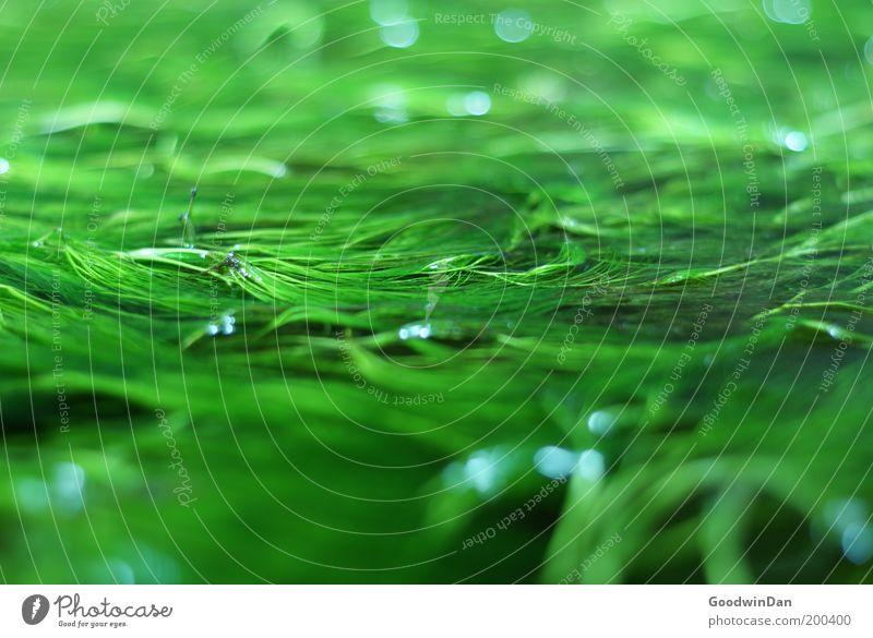 Ruhiges Treiben Natur Pflanze ruhig Umwelt hängen Im Wasser treiben