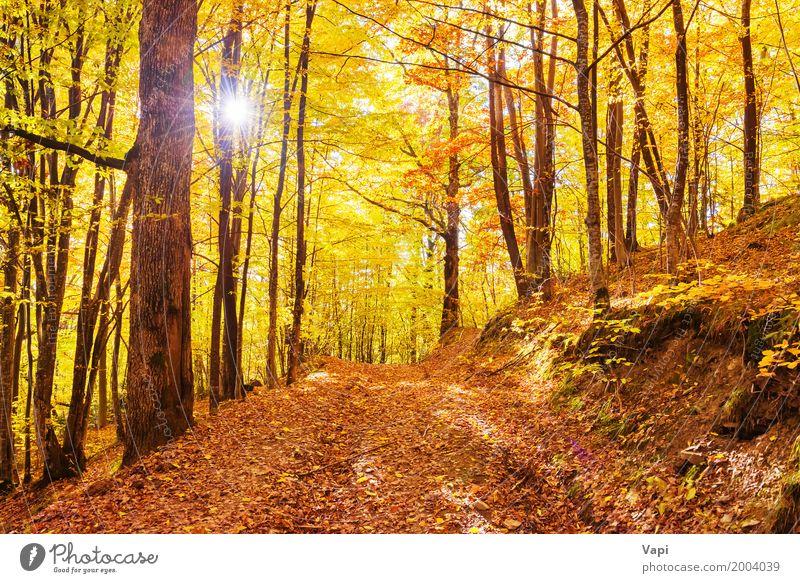 Morgen im Herbstwald Sonne Natur Landschaft Sonnenaufgang Sonnenuntergang Baum Blatt Park Wald hell mehrfarbig gelb orange rot Farbe fallen Licht Hintergrund