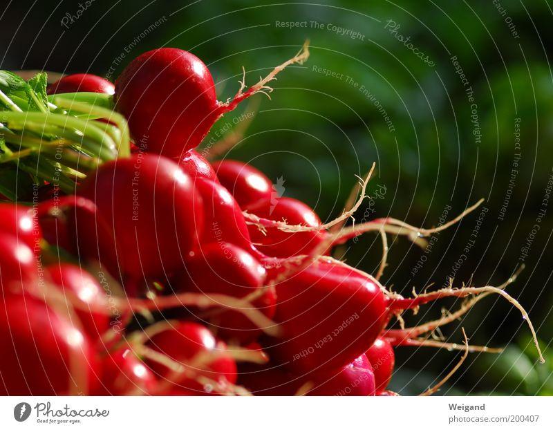 Rotkäppchen hinter den sieben Bergen Lebensmittel Gemüse Ernährung Bioprodukte Vegetarische Ernährung Diät Gesundheit frisch lecker Spitze grün rot Radieschen
