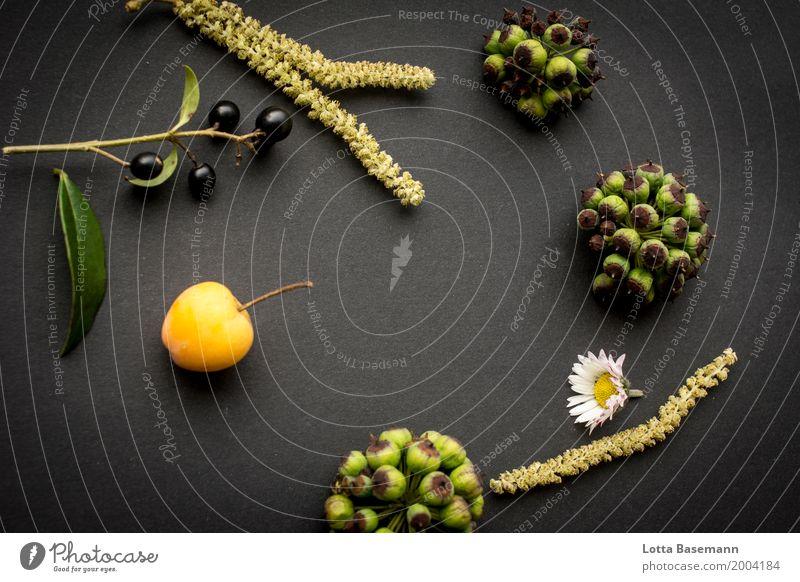 Frühling Garten Umwelt Natur Pflanze Tier Blume Blüte Wildpflanze Haselnuss Samen Beeren Zierapfel Apfel Gänseblümchen Duft liegen ästhetisch natürlich gelb