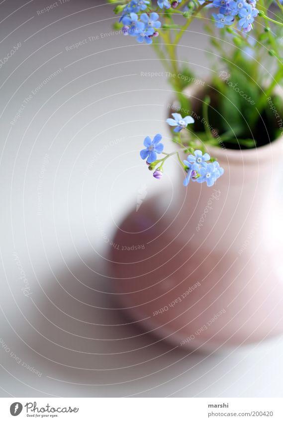 Vergiss mich nicht Pflanze Blume weich blau grün Vergißmeinnicht zart Vase Dekoration & Verzierung Blumenstrauß Blüte Blütenblatt Frühling Farbfoto