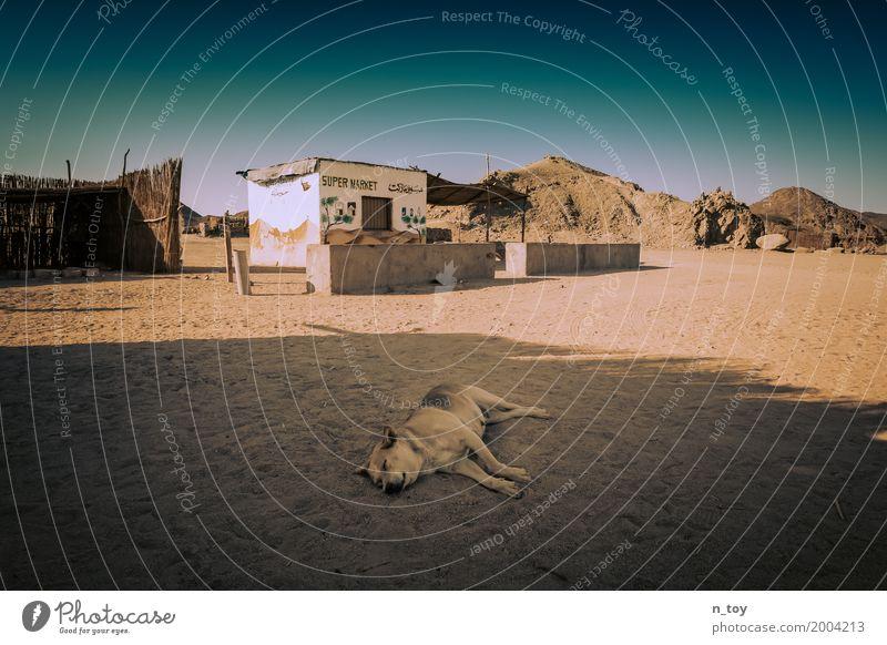 Wüstenhund Tier Hund 1 Sand entdecken verblüht einfach heiß hell blau orange Stimmung Tierliebe ruhig Heimweh Fernweh Einsamkeit Abenteuer