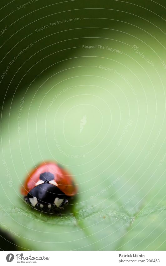 so lonely schön grün Pflanze rot ruhig Blatt schwarz Einsamkeit Garten Angst klein Umwelt leer Tiergesicht Insekt Punkt