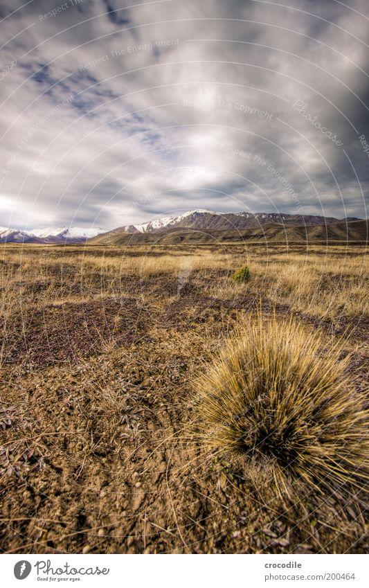 New Zealand 45 Natur Pflanze Wolken dunkel Wiese Gras Berge u. Gebirge Landschaft Feld Wind Wetter Umwelt Horizont Erde Sträucher bedrohlich