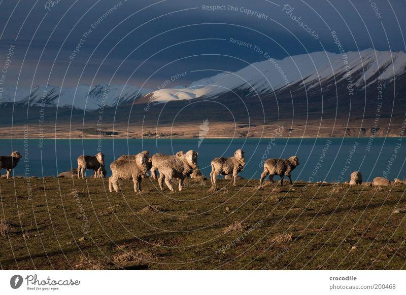 New Zealand 48 Umwelt Natur Landschaft Erde Gewitterwolken Horizont Frühling schlechtes Wetter Unwetter Sturm Eis Frost Schnee Pflanze Gras Wiese Hügel Felsen