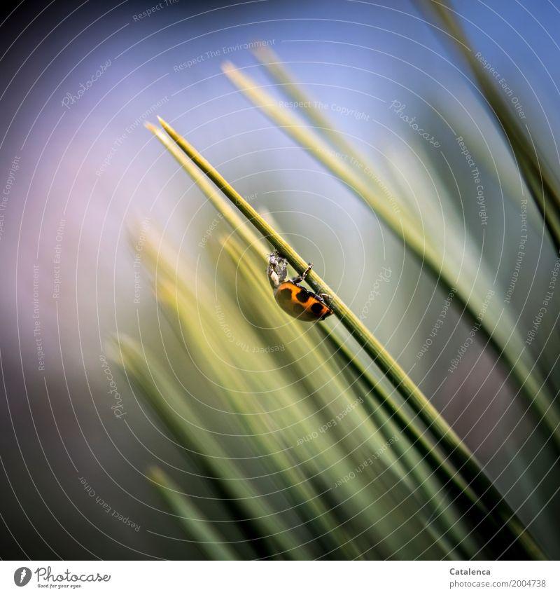 Mahlzeit Himmel Pflanze blau grün Baum Tier schwarz Frühling klein orange Zufriedenheit Erfolg Schönes Wetter violett Insekt Ende