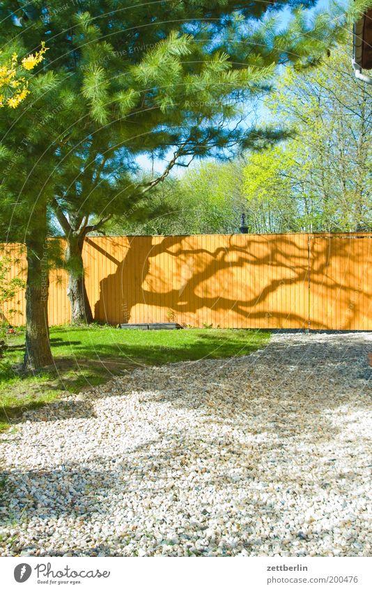 Vorgarten Garten Zaun Holzzaun Licht Schatten Baum Kiefer Birke Laubbaum Nadelbaum Natur Pflanze Frühling Kies Gras Rasen Gartenbau Schrebergarten Sonnenlicht