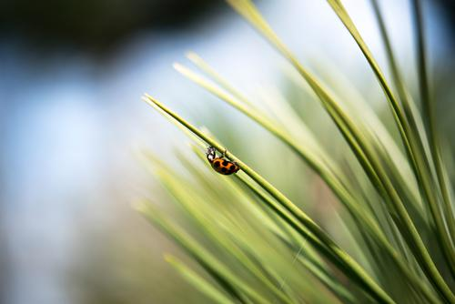 Futtern Natur Pflanze blau grün weiß Baum Tier Wald schwarz Umwelt Essen Frühling Garten orange Erfolg Schönes Wetter