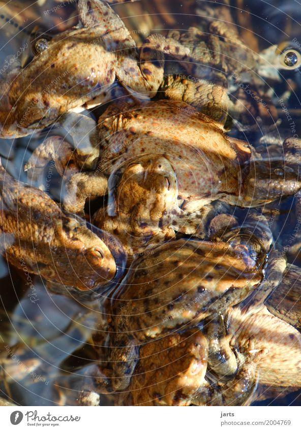 krötensuppe Suppe Eintopf Schönes Wetter Teich Tier Wildtier Frosch Tiergruppe Schwimmen & Baden nass natürlich Natur chaotisch durcheinander Kröte Farbfoto