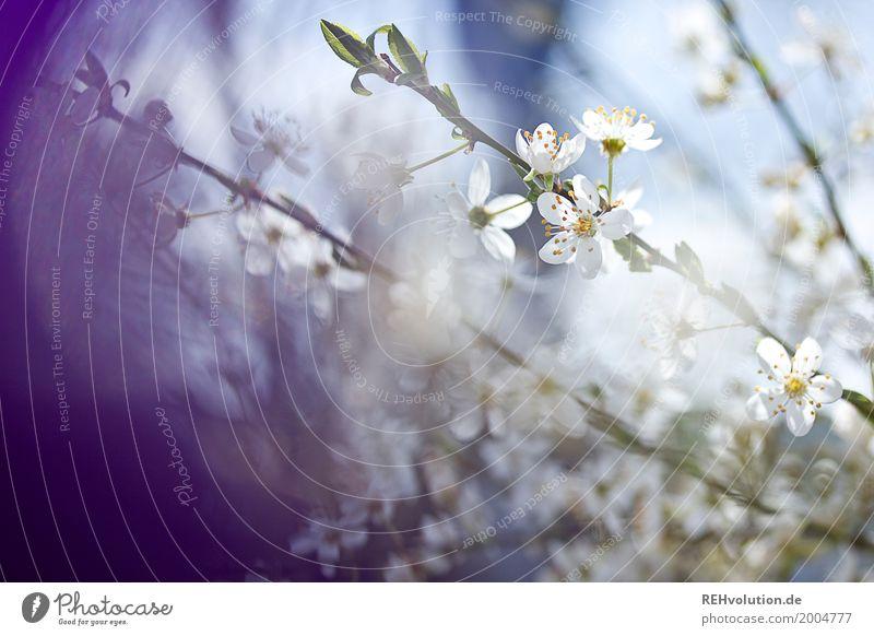Frühlingsgeblühe Umwelt Natur Schönes Wetter Pflanze Baum Sträucher Blüte Garten Park Blühend natürlich schön blau violett weiß Zweig Farbfoto Außenaufnahme
