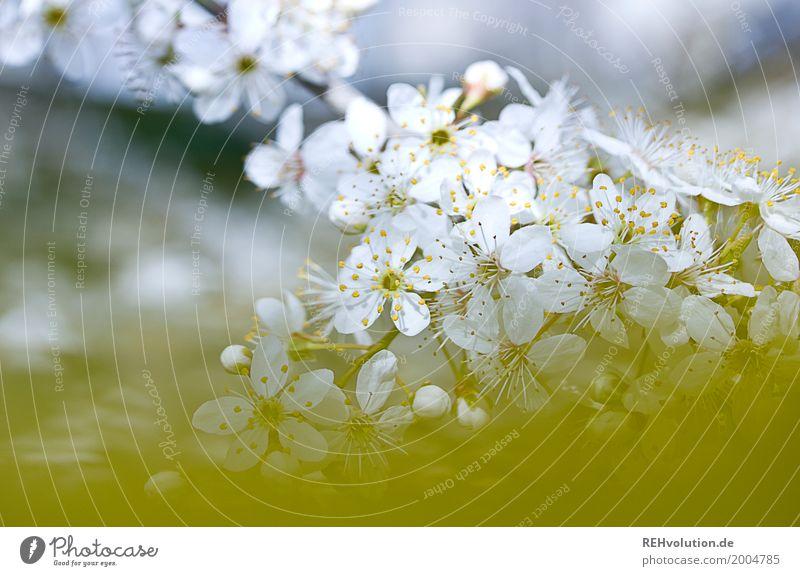 Frühling Natur schön weiß Baum Umwelt gelb Blüte natürlich Sträucher Blühend
