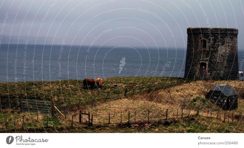 Schottland Umwelt Landschaft Erde Wasser Wolken Frühling Wetter schlechtes Wetter Wiese Wellen Küste Großbritannien Isle of Skye Europa Menschenleer Bauwerk