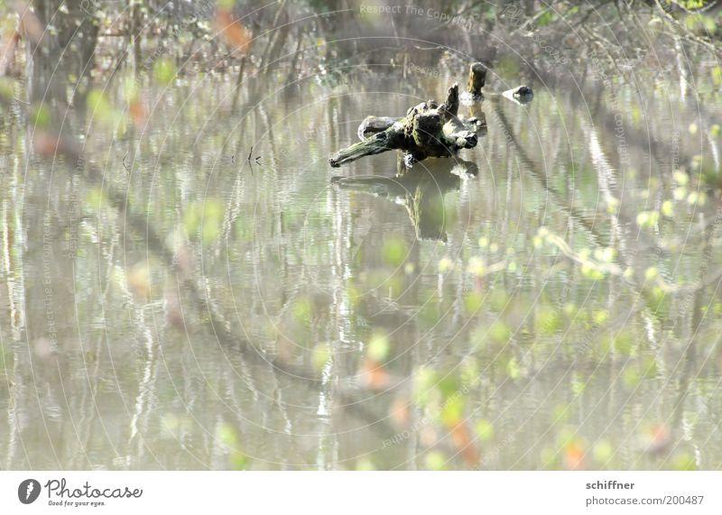 Waldspiegel III Natur Pflanze Wasser Baum Teich See Romantik achtsam Gelassenheit ruhig Hoffnung Glaube Wurzel Einsamkeit malerisch Märchenwald träumen