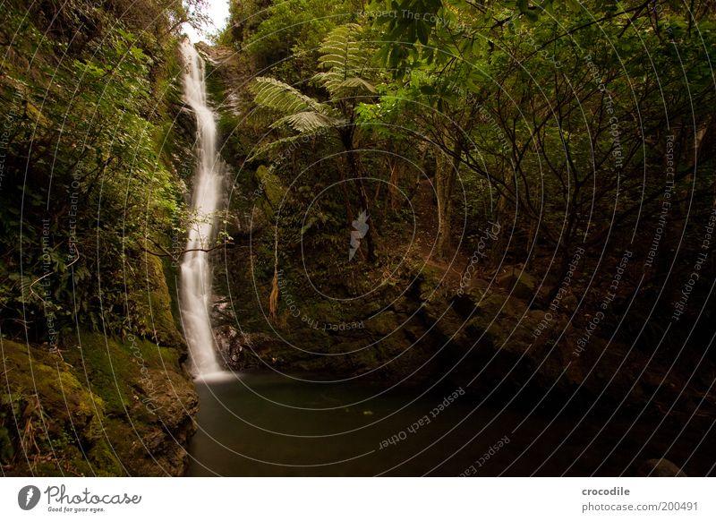 New Zealand 59 Umwelt Natur Landschaft Urelemente Wald Urwald Hügel Felsen Teich Wasserfall außergewöhnlich Lebensfreude ästhetisch Zufriedenheit Erholung