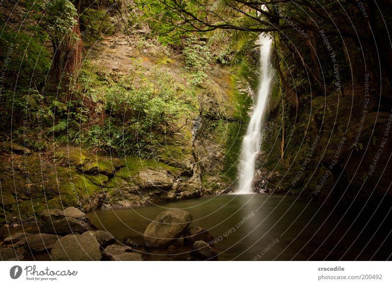 New Zealand 60 Umwelt Natur Landschaft Urelemente Wasser Pflanze Baum Gras Sträucher Moos Wald Urwald Hügel Felsen Teich Wasserfall ästhetisch außergewöhnlich