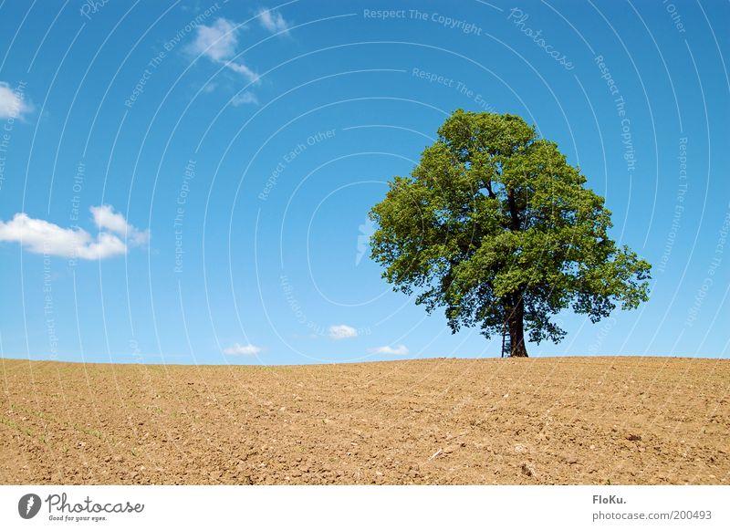 Alleinstellungsmerkmal Umwelt Natur Landschaft Pflanze Erde Himmel Horizont Frühling Wetter Schönes Wetter Baum Feld Hügel Wachstum blau braun grün