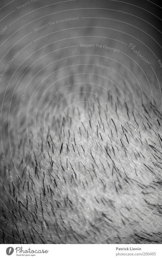 3-Tage-Bart maskulin Mann Erwachsene Haut nah Bartstoppel Linie Strukturen & Formen schwarz Wange dunkel Rasieren Schwarzweißfoto Nahaufnahme Detailaufnahme
