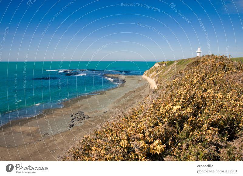 New Zealand 65 Umwelt Natur Landschaft Urelemente Sand Wasser Horizont Schönes Wetter Wiese Hügel Felsen Wellen Küste Strand Riff Leuchtturm außergewöhnlich