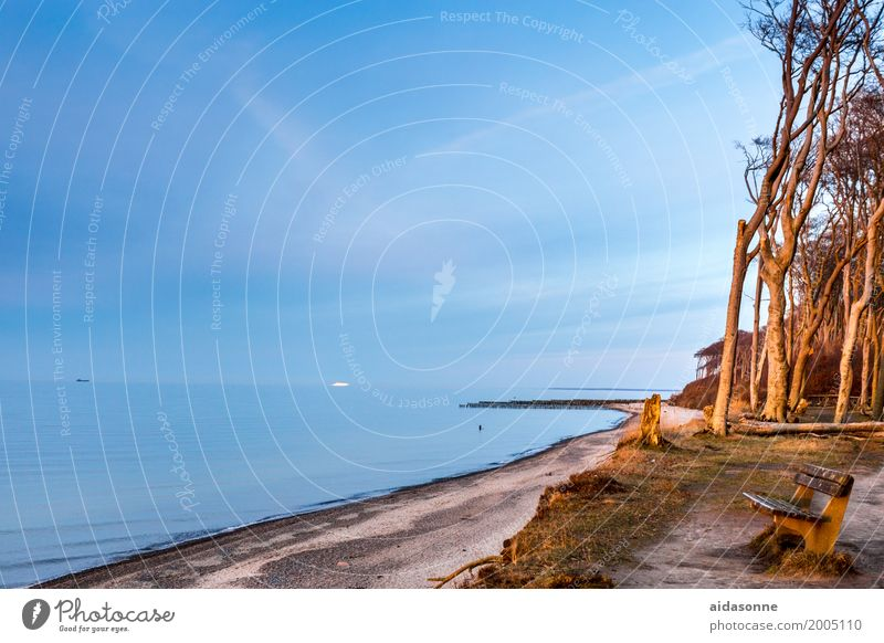 Ostseestrand nienhagen Natur Landschaft Pflanze Horizont Schönes Wetter Baum Wald achtsam Vorsicht Gelassenheit ruhig Nienhagen Gespensterwald Strand Bank