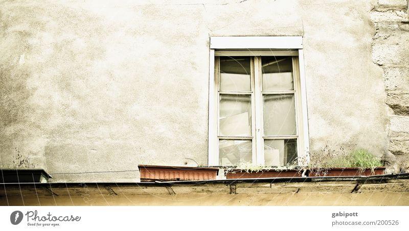 le marais alt grün Haus Leben Fenster Wand Gefühle Architektur grau Gebäude Mauer Fassade frei Wandel & Veränderung Häusliches Leben Vergänglichkeit