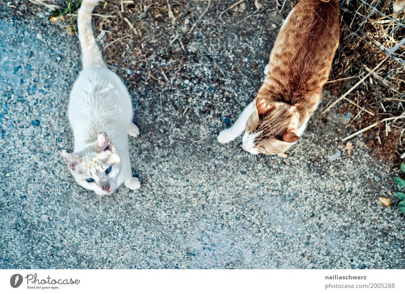 Strassenkatzen, Kreta Sommer Natur Tier Haustier Katze 2 Tiergruppe Tierpaar beobachten entdecken Kommunizieren laufen Blick frech Zusammensein natürlich