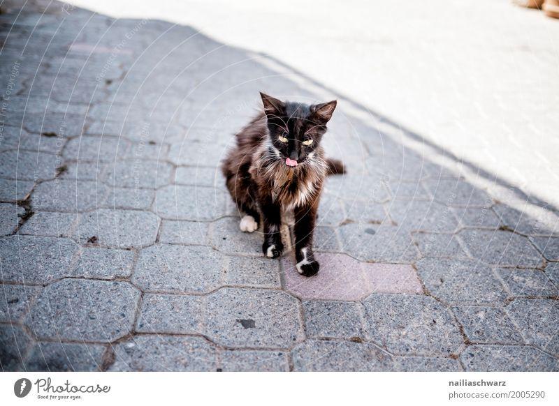Strassenkatze Katze Sommer weiß Erholung Einsamkeit Tier schwarz Straße Essen Freiheit Stein sitzen beobachten niedlich weich Neugier