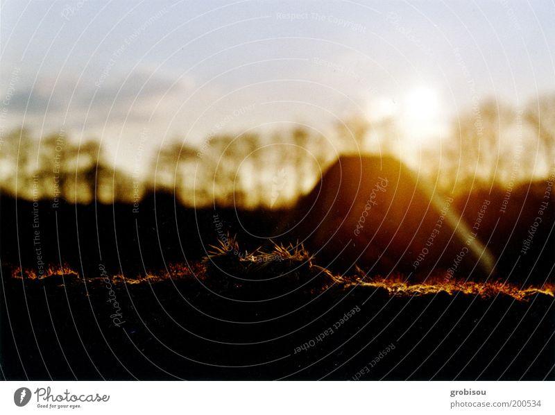 Abendsonne trifft auf Mauermoos Natur Landschaft Herbst Moos Stimmung Farbfoto Außenaufnahme Menschenleer Dämmerung Sonnenlicht