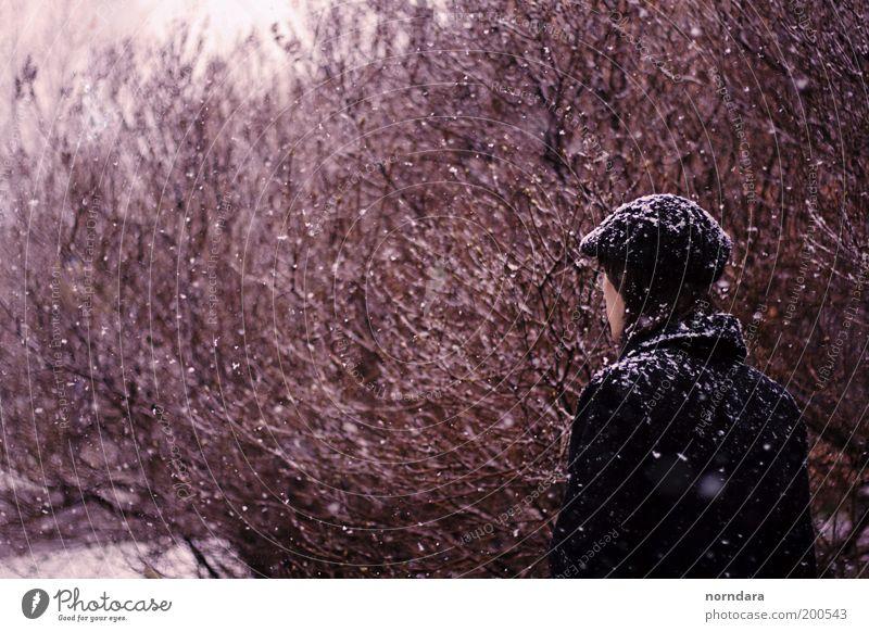 Natur Jugendliche Baum schön Pflanze Erwachsene Farbe kalt Schnee Stimmung Rücken Hoffnung Romantik Ast 18-30 Jahre Schönes Wetter