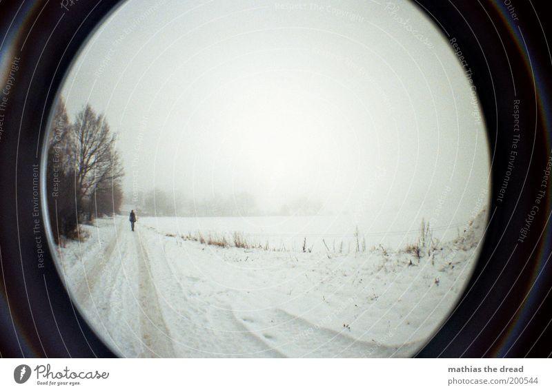 EISIGER RÜCKBLICK Mensch Himmel Natur Baum Winter Umwelt dunkel kalt Landschaft Schnee Wege & Pfade Horizont Eis Feld gehen Nebel