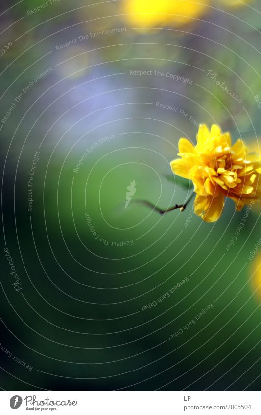 Blumentraum Lifestyle Design Freude Wellness Leben harmonisch Wohlgefühl Zufriedenheit Sinnesorgane Ferien & Urlaub & Reisen Häusliches Leben Traumhaus Garten