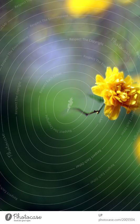 Blumentraum Natur Ferien & Urlaub & Reisen schön Freude Leben Lifestyle Blüte Innenarchitektur Hintergrundbild Stil Garten Feste & Feiern Design