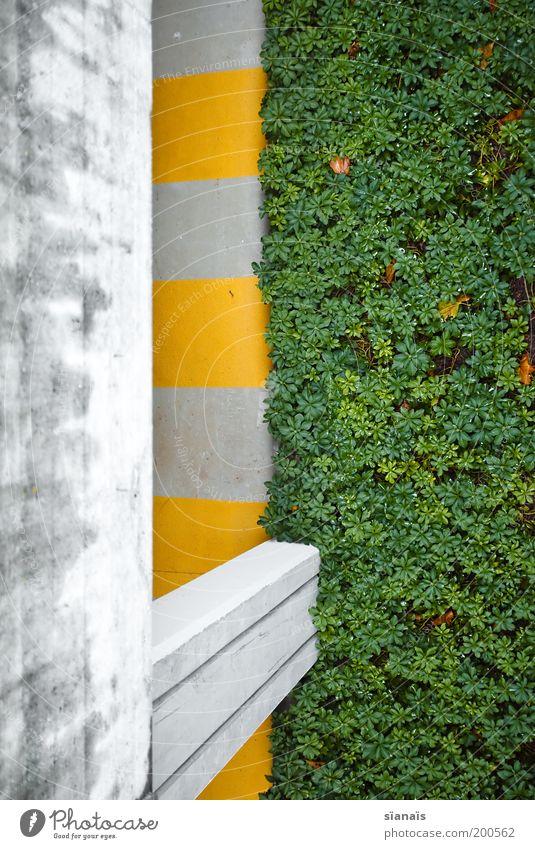 LE VERT grün Pflanze gelb Wand grau Mauer Beton Grenze Bauwerk Parkhaus graphisch Perspektive Zebrastreifen Fußgängerzone Tiefgarage Betonboden