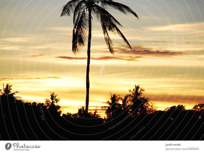 machweo Ferne Himmel Wolken Sonnenlicht Schönes Wetter exotisch Palme Kenia Afrika Klischee Romantik Kitsch Urlaubsfoto Abenddämmerung Reisefotografie Paradies