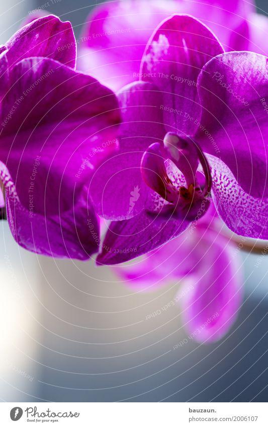 dee. Lifestyle elegant Stil schön Dekoration & Verzierung Natur Pflanze Orchidee Blüte exotisch Blühend rosa Fröhlichkeit Frühlingsgefühle Farbfoto