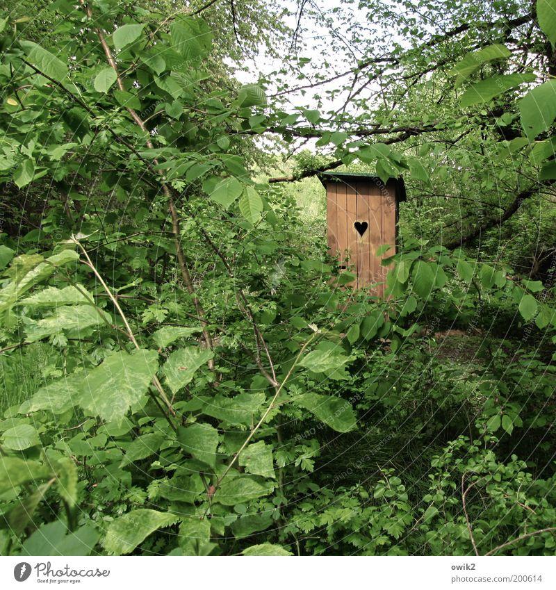 Öffentlicher Dienst Umwelt Natur Landschaft Pflanze Baum Blatt Wald Hütte Bauwerk Gebäude Toilette Holzhaus Öffentliche Toilette Klotür Herz Zeichen Glück