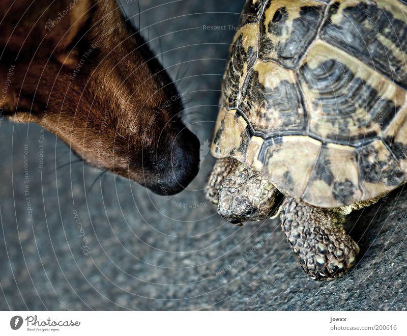 Nur gucken, nich anfassen... Tier Hund Freundschaft Angst Nase bedrohlich Schutz Vertrauen Neugier Geruch Haustier Schnauze begegnen Schildkröte Gefühle Tierliebe