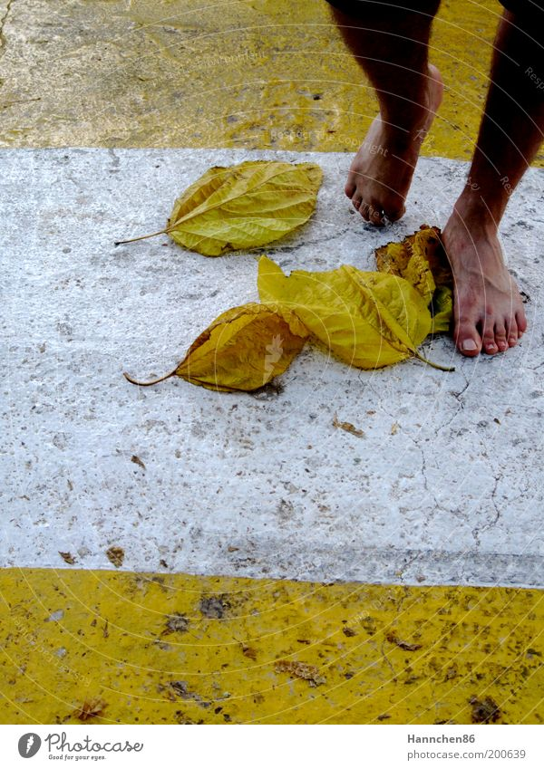 unterwegs Natur weiß Blatt gelb Freiheit Fuß Zufriedenheit Detailaufnahme