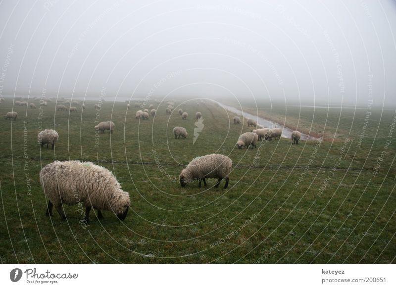 Gemeinsam einsam Natur Wasser grün Ferien & Urlaub & Reisen Tier Wiese Gras Frühling Landschaft Luft Zufriedenheit Nebel Ausflug Tiergruppe stehen