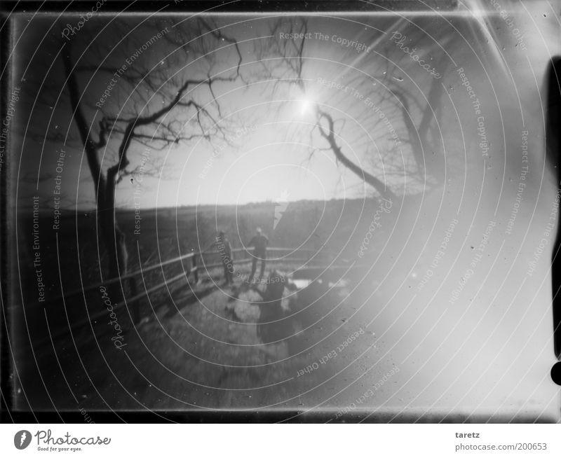 Ein leichtes Säuseln Mensch Natur Baum ruhig Ferne Gefühle Freiheit Landschaft Aussicht Schwarzweißfoto fantastisch Sehnsucht analog Schönes Wetter Geländer