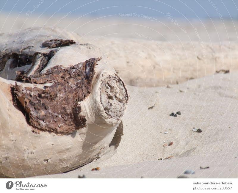 Holzauge Natur Sommer Strand ruhig Einsamkeit Wärme Sand Landschaft Stimmung Küste Umwelt Erde Wüste Vergänglichkeit Verfall