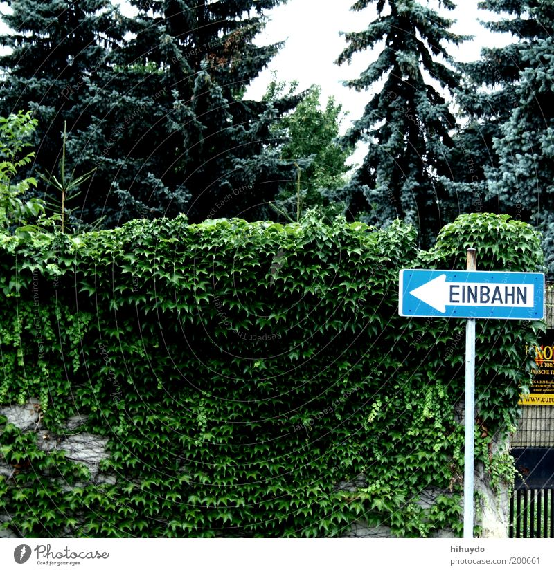 einbahn Garten Umwelt Natur Pflanze Verkehrszeichen Verkehrsschild Schilder & Markierungen beobachten Einbahnstraße Hinweisschild links Pfeil Richtung